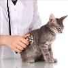 Ветеринарные клиники в Плюссе